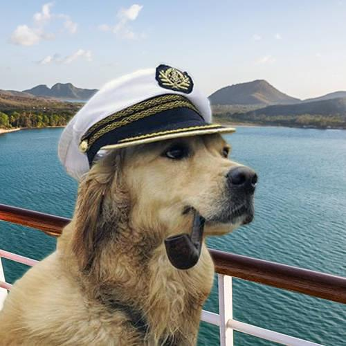 Cruise Ships That Allow Small Dogs